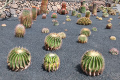Jardin de cactus, Jardin de Cactus, Lanzarote, Espagne Photo libre de droits