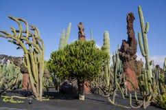 Jardin De Cactus Lanzarote Photo stock