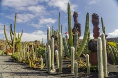 Jardin De Cactus Lanzarote photo stock