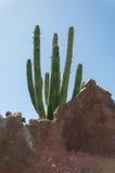 Jardin de cactus, Lanzarote, Espagne Image stock