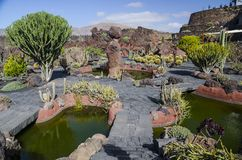 Jardin De Cactus Lanzarote royalty free stock photo