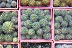 Jardin de cactus de vue supérieure, foyer central photographie stock
