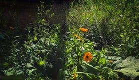 Jardin de campagne pendant l'été image stock
