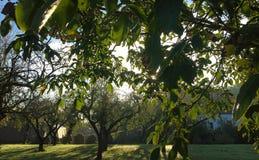 Jardin de campagne pendant l'été photographie stock libre de droits