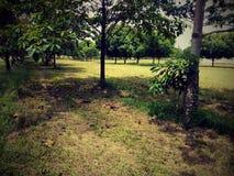 jardin de capture de vert de nature beau photo libre de droits