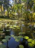 Jardin de Caribean Photo libre de droits