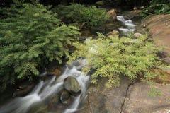 Jardin de cascade Photos stock