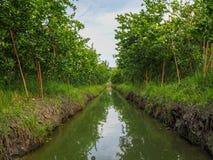 Jardin de chaux dans la province de Samut Sakhon de secteur de Phaeo d'interdiction, Thaïlande photos stock