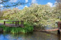 Jardin de Cherry Blossom Trees au printemps Photos libres de droits