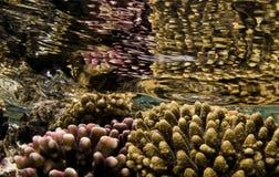 Jardin de corail Photos libres de droits