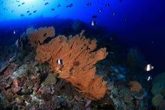 Jardin de corail Photographie stock