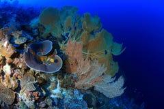 Jardin de corail Photo stock