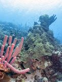Jardin de corail dans les Cara?be photographie stock