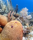 Jardin de corail dans les Cara?be image stock
