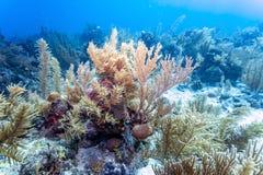 Jardin de corail dans les Cara?be images libres de droits