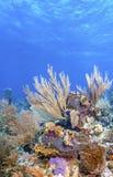 Jardin de corail dans les Cara?be photos stock