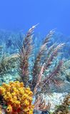 Jardin de corail dans les Cara?be photos libres de droits