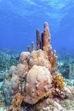Jardin de corail dans les Cara?be images stock