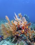 Jardin de corail dans les Cara?be photo stock