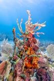 Jardin de corail dans les Cara?be photo libre de droits