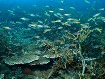 Jardin de corail Vista photos libres de droits