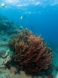 Jardin de corail Vista photographie stock libre de droits
