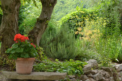 Jardin de cottage Images libres de droits