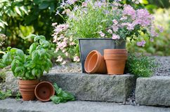 Jardin de cottage - belles fleurs dans des pots Image libre de droits