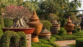Jardin de couleurs de jardin tropical Thaïlande de Nong Nooch de parc Photographie stock libre de droits