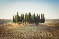 Jardin de Cypress sur une colline parmi les champs de roulement vides en Toscane images libres de droits