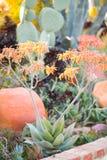Jardin de désert avec des succulents Photo libre de droits