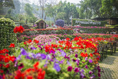 Jardin de Fahrenheit Luang de Mae Chiangrai, Thaïlande Image stock