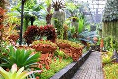 Jardin de fasciata d'Aechmea Photographie stock
