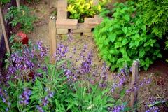 Jardin de fines herbes Photographie stock libre de droits