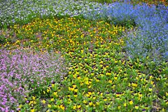 Jardin de fleur Image libre de droits