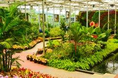 Jardin de fleur Image stock