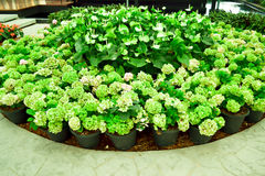 Jardin de fleur Photos libres de droits