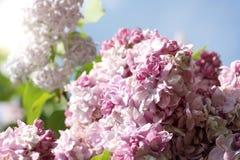 Jardin de fleur au printemps image libre de droits