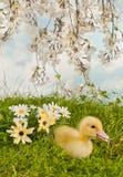 Jardin de fleur avec le caneton de Pâques Images stock