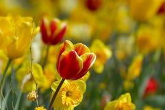 Jardin de fleur coloré images libres de droits
