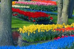 Jardin de fleur coloré photos libres de droits