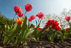 Jardin de fleur coloré image stock