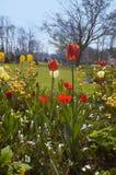 Jardin de fleur coloré dans le spri photo libre de droits