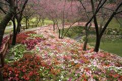 Jardin de fleur de Taiwan image libre de droits