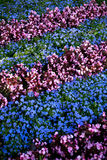Jardin de fleur urbain Image stock