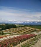 Jardin de fleurs Images stock