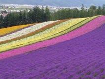 Jardin de fleurs Photo stock