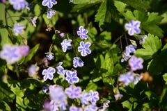 Jardin de fleurs au printemps Photographie stock