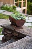 Jardin de fleurs décoratif de panier de tonne d'Old de modèle de vintage Photo modifiée la tonalité Images stock
