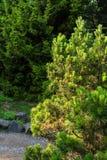 Jardin de fleurs de nature Photo stock